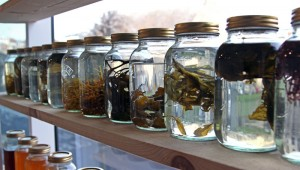 http://genomicgastronomy.com/wp-content/uploads/2012/09/seaweed1-300x170.jpg