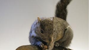 http://genomicgastronomy.com/wp-content/uploads/2016/03/InvasivorismSquirrel-300x170.png