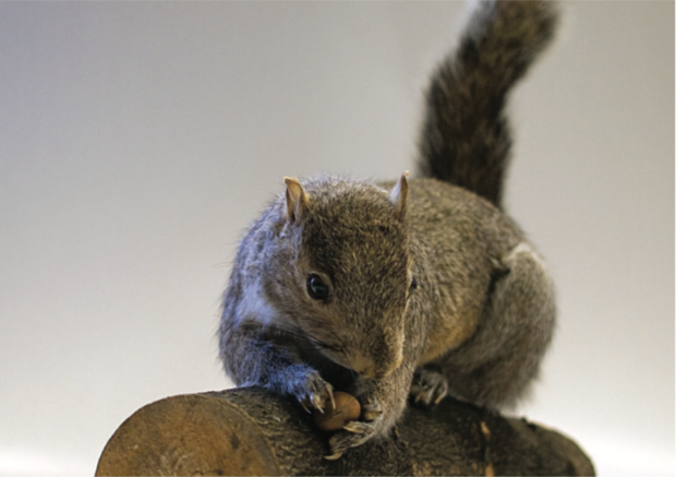http://genomicgastronomy.com/wp-content/uploads/2016/03/InvasivorismSquirrel-620x437.png