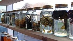 https://genomicgastronomy.com/wp-content/uploads/2012/09/seaweed1-300x170.jpg