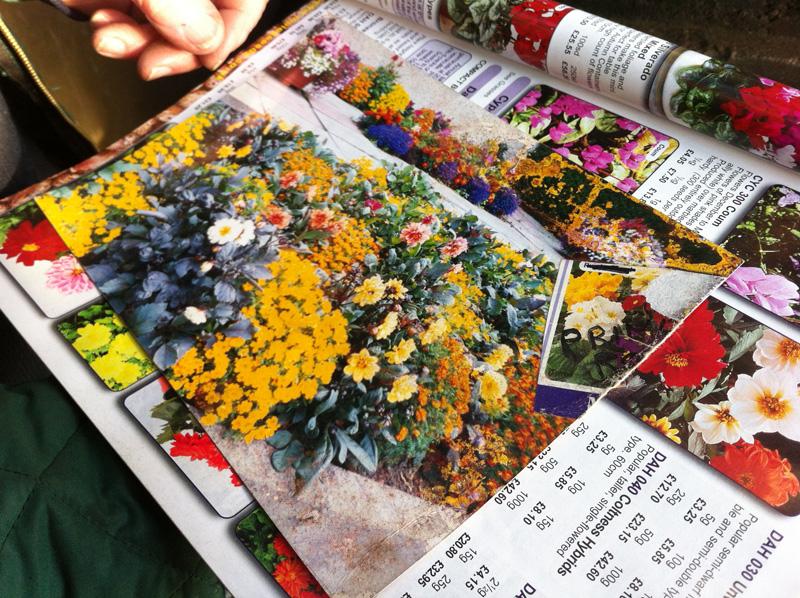 tom-garden