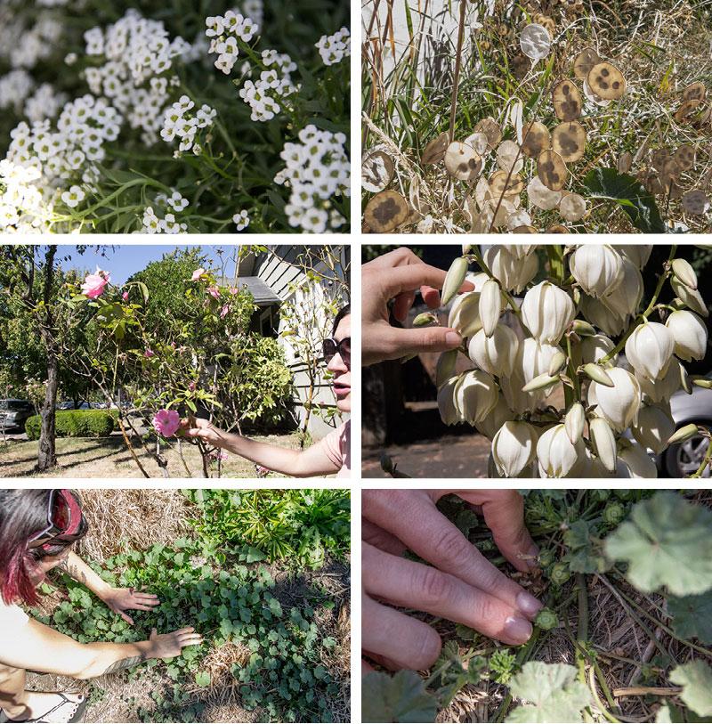 forraging-plants2